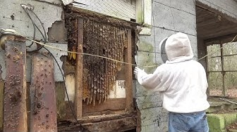 4x4 winter bee hive removal and relocation