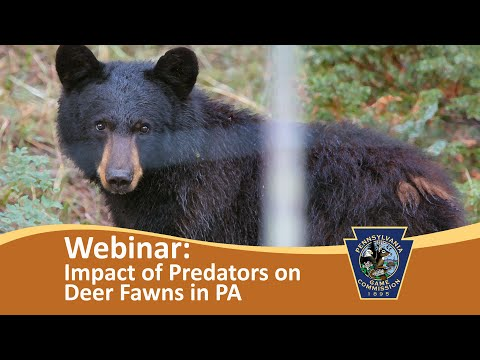 Webinar - Impact of Predators on White-tailed Deer Fawns in Pennsylvania