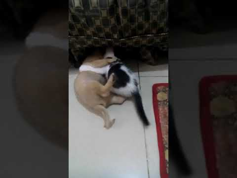 MMA Version of Cats and Dogs | Random