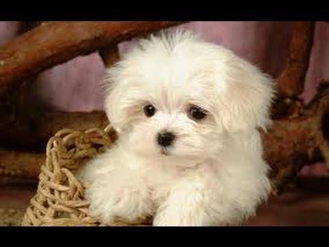 Продажа собак. На доске объявлений olx казахстан легко и быстро можно купить щенка. Заведи друга прямо сейчас!