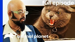 Aggressive Cat Is Stopping Owners From Getting Married! | My Cat From Hell (Full Episode)