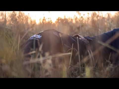 """""""WIGGLE"""" twerk video by FRAULES team (song Jason Derulo """"Wiggle)"""