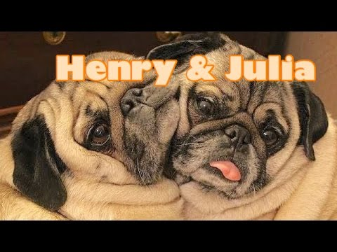 Henry & Julia The Pugs Are Famous - Children's Bedtime Story/Meditation