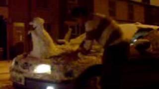 hawler 2010 SHORSH BABANY I MISS U HAWLER XXX