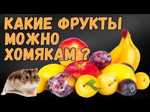 Какие фрукты можно давать хомякам.  Питание хомяков.