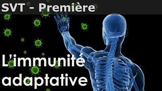SVT - Première - La réponse immunitaire adaptative