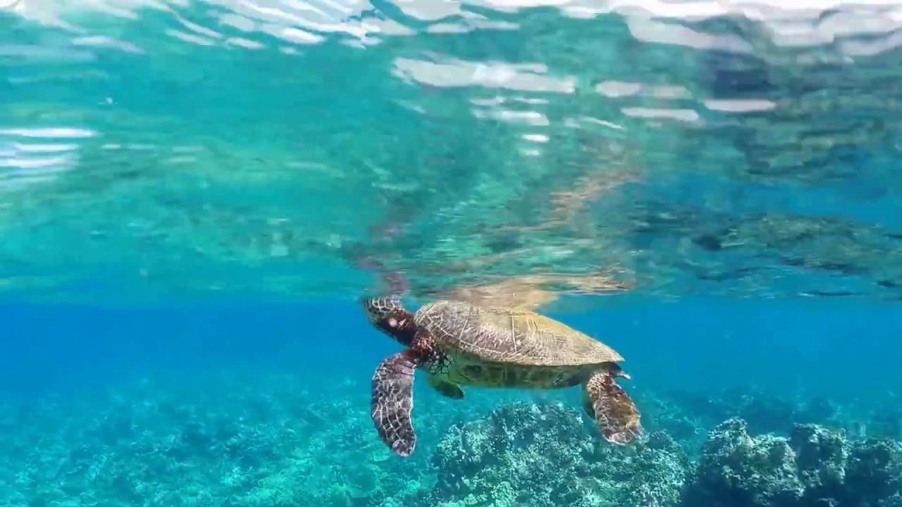 Snorkeling Ulua Beach Wailea Hawai I