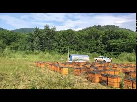 Multi-sweet Group Chinese bee farm beekeeper