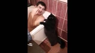 Кот который за кальмары расцарапает любого.
