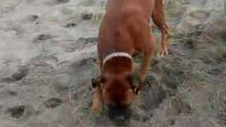 Samba disfrutando de la playa