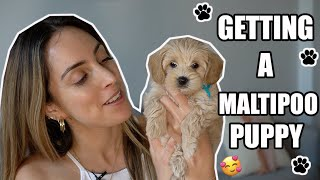 GETTING A MALTIPOO PUPPY! | Bringing Home our 8week old Puppy!