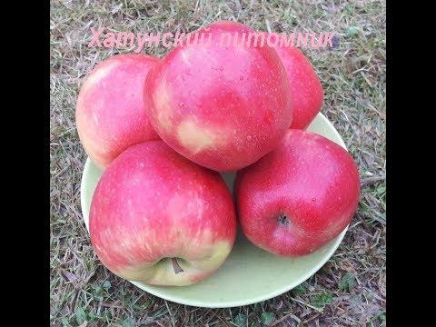 Сорта яблони Хани крисп и Лигол в Московской области | плодопитомник | московской | области | яблоня | яблони | лучшие | яблок | сорта | лигол | крисп