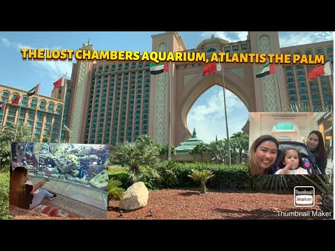 The Lost Chamber Aquarium, Atlantis The Palm a place to visit with kids