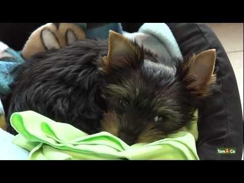 Premiers jours et nuits avec votre nouveau chien - Mon Chien - Tom&Co
