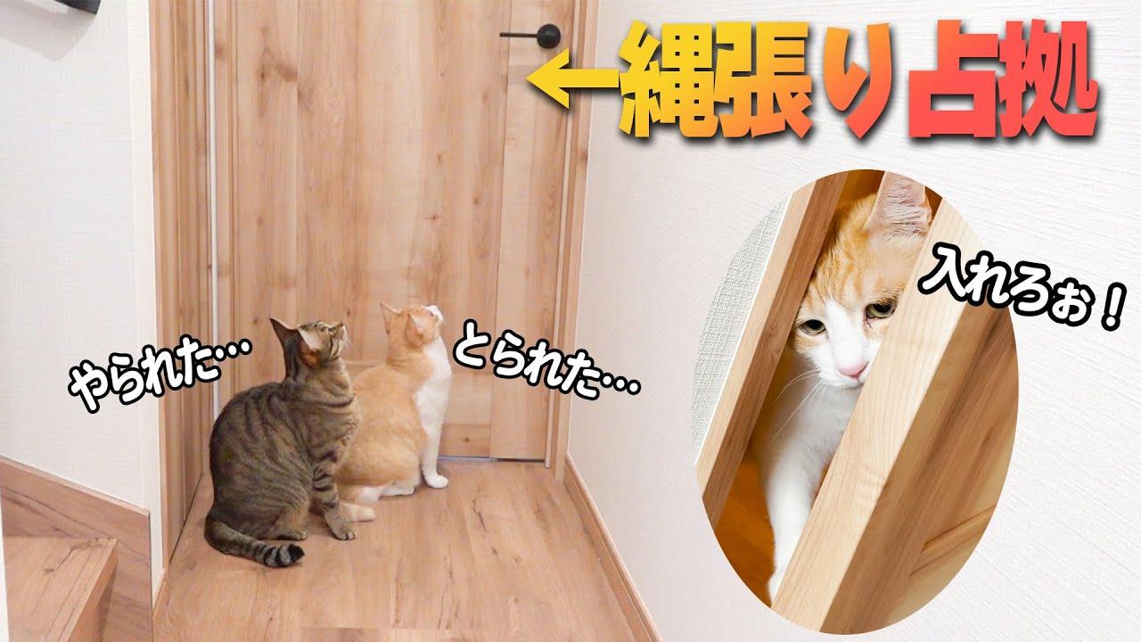 飼い主に遊び場を取られて悲しそうに泣く猫たち