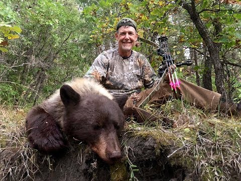 Colorado Chocolate/blonde Bear With A Recurve - Fred Eichler