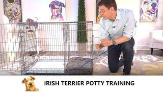 Irish Terrier Potty Training from WorldFamous Dog Trainer Zak George, Train an Irish Terrier Puppy