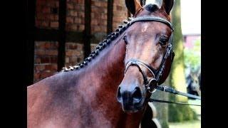 www.sporthorses-online.com 2011 Hanoverian Dressage stallion prospect sold