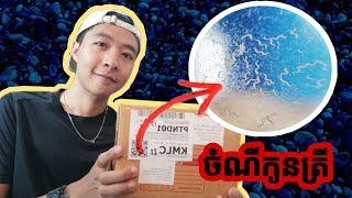 ចំណីកូនត្រី Micro Worm (ដង្កូវចេក) Unboxing