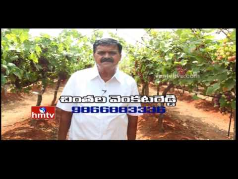 Nela Talli   Grapes Cultivation Tips and Techinques   Weekend Special - 05-03-16   HMTV