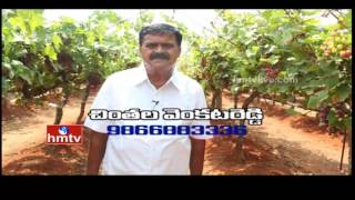 Nela Talli | Grapes Cultivation Tips and Techinques | Weekend Special - 05-03-16 | HMTV