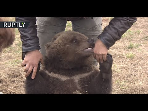 Meanwhile in Russia: Bear cub lives at airfield