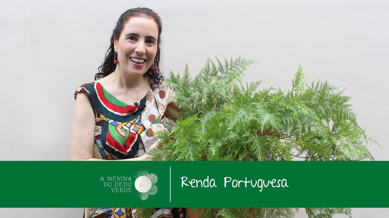 No Figueiredo Ensina Como Cultivar De Renda Portuguesa Rabbit S