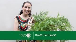 Nô Figueiredo Ensina Como Cultivar de Renda Portuguesa/Rabbit's Foot Fern