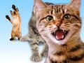 Kitties Singing Joy-Joy-Joy!