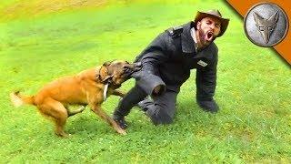 УКУС СОБАКИ ИЩЕЙКИ (Розыскная собака против человека) Brave Wilderness на русском
