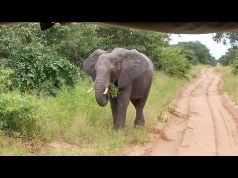 Botswana Safari March 2017