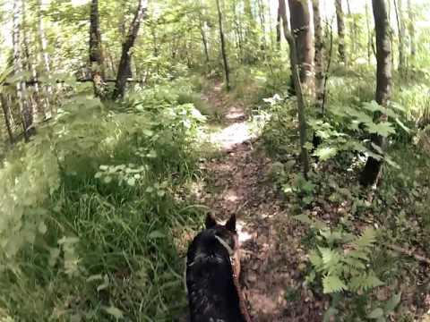 Вопрос: Как научить собаку брать след?