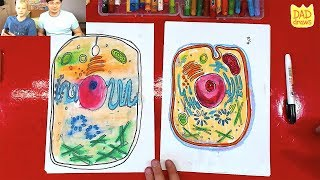 How to draw a Animal Cell / living cell