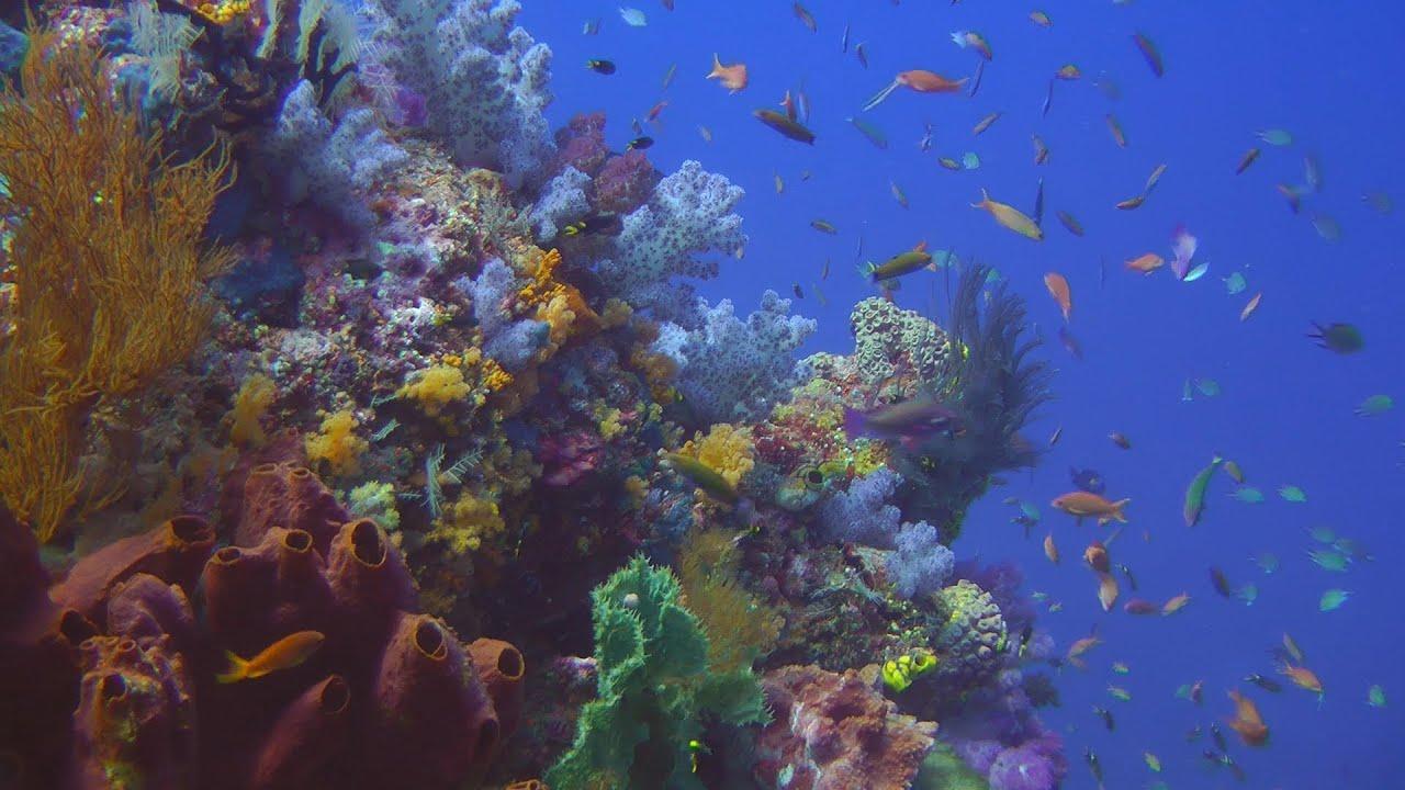 Diving Raja Ampat HD - YouTube