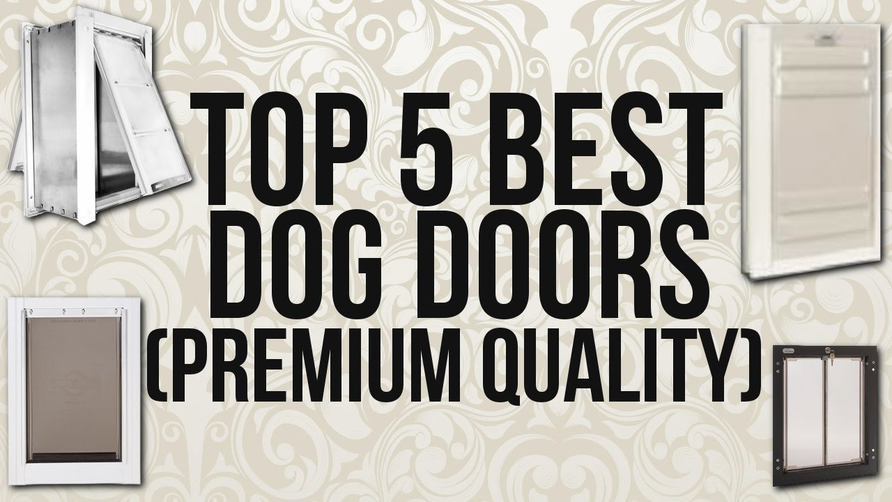 Gentil Top 5 Best Dog Doors (Premium Quality)
