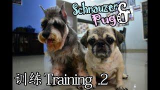 Schnauzer & Pug