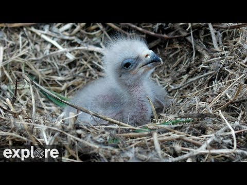 Two Harbors Bald Eagle Cam powered by EXPLORE.org