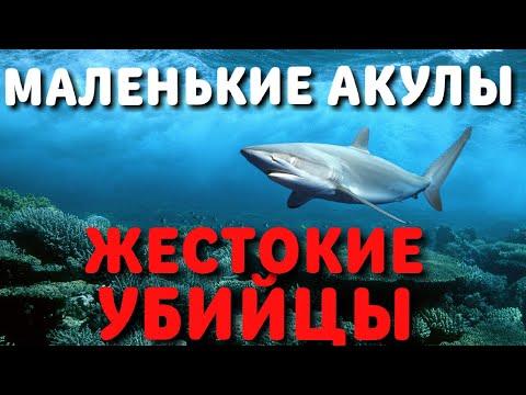 АКУЛЫ УБИЙЦЫ 2020 | Документальный фильм Рен ТВ
