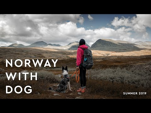 Norway trip with dog | Sita - Border Collie