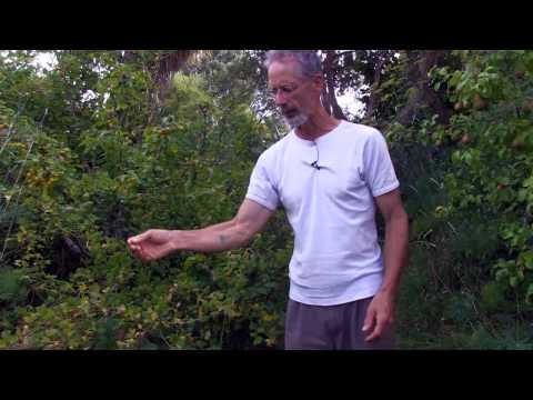 Temperate Climate Permaculture Food Forest (Riverton, New Zealand)