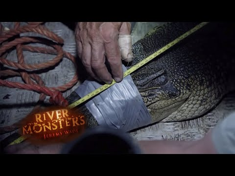 Hunting Saltwater Crocodiles - River Monsters