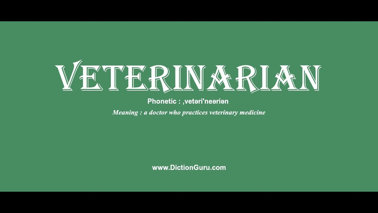 veterinarian: Pronounce veterinarian with Meaning, Phonetic, Synonyms and  Sentence Examples
