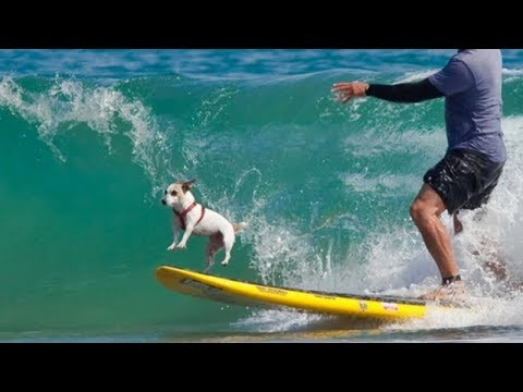 You will be WOWED, these DOGS ARE BETTER AT SPORTS THAN YOU! - Funny DOG VIDEOS