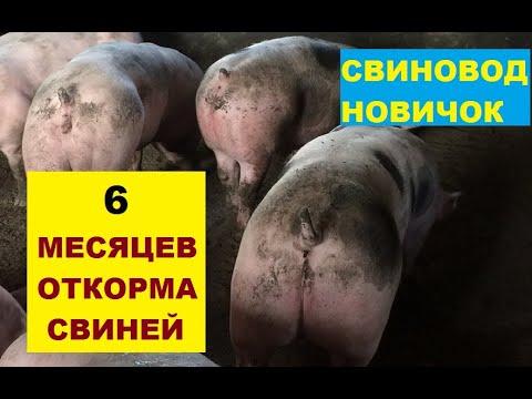 Вопрос: Почему свиньи хотят вывалятся в грязи, а кошечки нет?