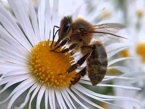 ¿Por qué las abejas producen miel? | Razones - YouTube