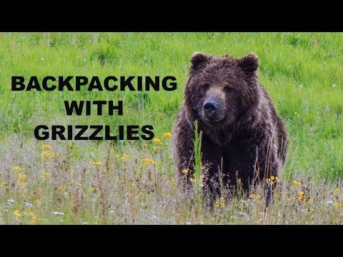Backpacking with Grizzly Bears: Yellowstone's Mirror Plateau, Lamar River, Lovely Pass Route