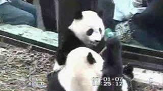 """Tai Shan & Mei Xiang Eating """"Boo"""""""