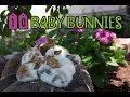 Ten Baby Bunnies