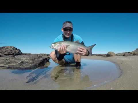 Shad (Elf) Fishing In The Eastern Cape. 55cm Shad On Dropshot.