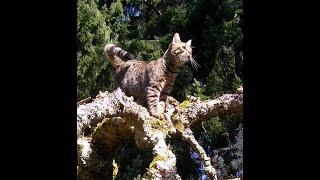 Pac NW Adventure Cat #2  apple trees and wheelbarrow